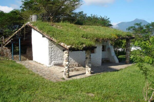 house with green roof