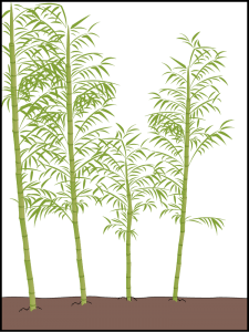 bamboo multiplication chart
